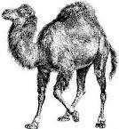 Perl: Créer et manipuler un tableau de Hash